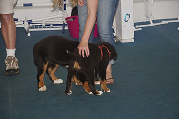 Flat gentle hands always, never scruff or biting may get worse as your puppy will need to defend himself.