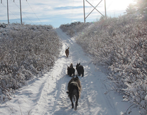 Although Annie may be the last dog, she is still ahead of me:)